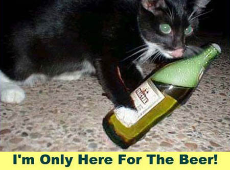 Cat licking beer