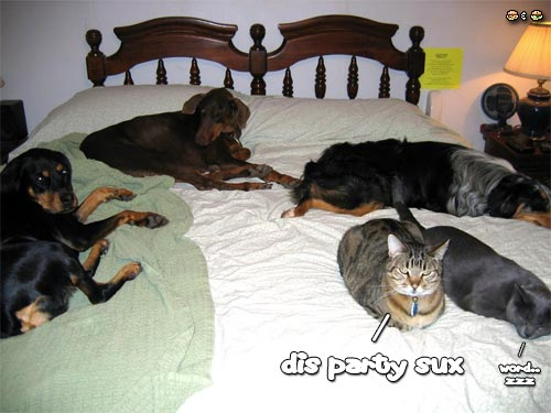 cats and dogs sleeping on a bed - this party sucks