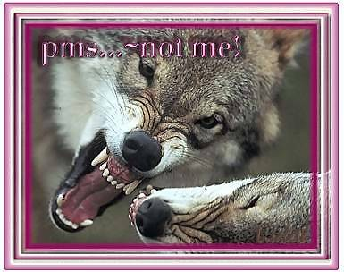 pms not me wolves