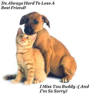 it's always hard to lose a best friend i miss you buddy and i'm so sorry