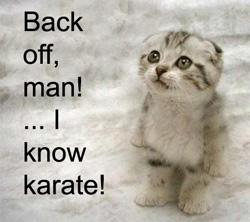 Kitten knows karate