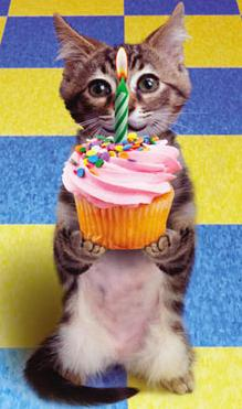 kitten cupcake happy birthday