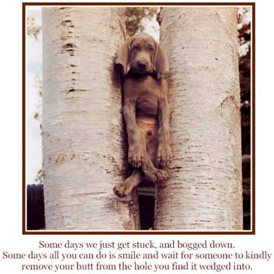 dog stuck between trees