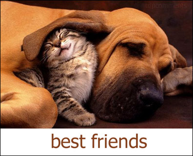 best friends dog cat