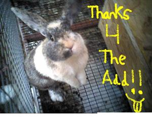 thanks for the add bunny rabbit