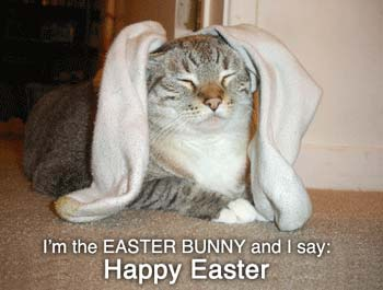 im the easter bunny and i say happy easter