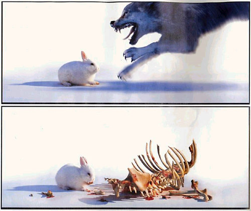bunny rabbit kills and eats wolf
