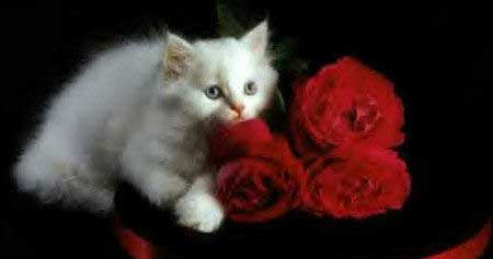 cat on red flowers