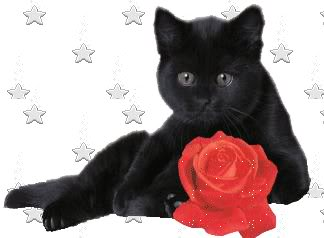 black cat with rose