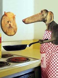 dog cooking cat