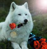 wolf with flowers