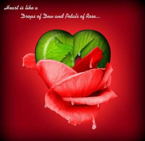 heart is like drops of dew and petals of rose