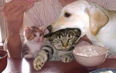 cat in dog's mouth