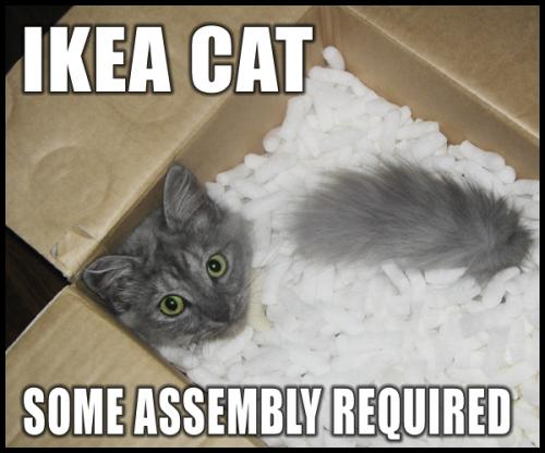 ikea cat - cat in styrofoam box
