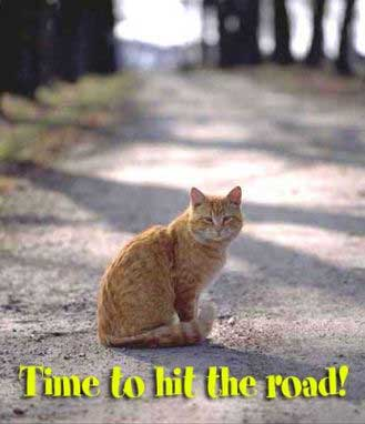 time to hit the road cat