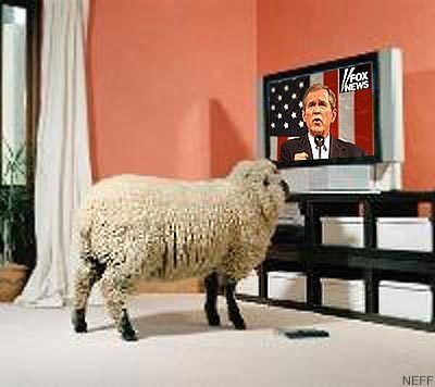 sheep watching george bush on television
