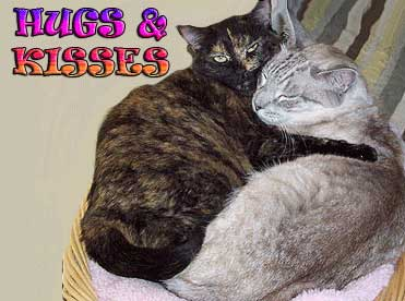 hugs and kisses cats