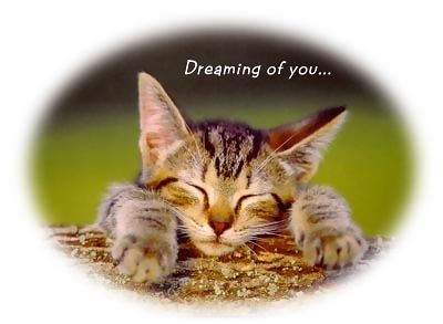 dreaming of you cat