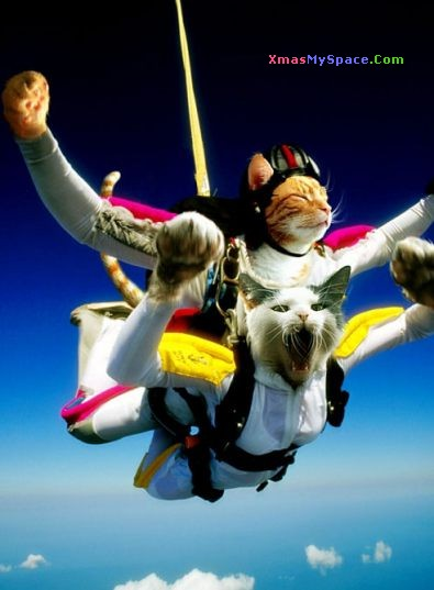 cat skydivers