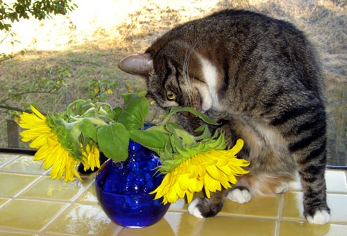 cat smells flowers