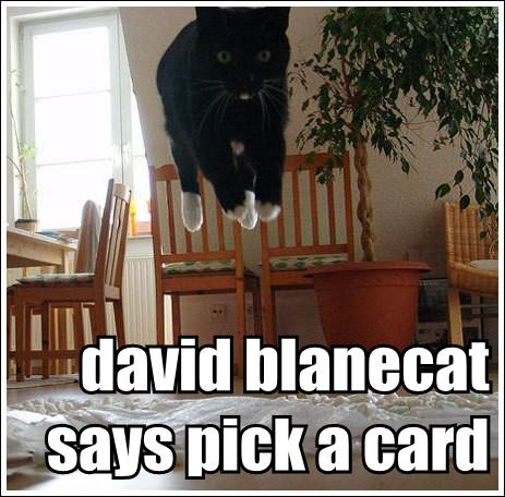 david blanecat says pick a card