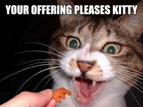your offering pleases kitty