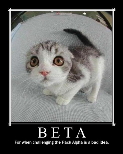 beta for when challenging the pack alpha is a bad idea