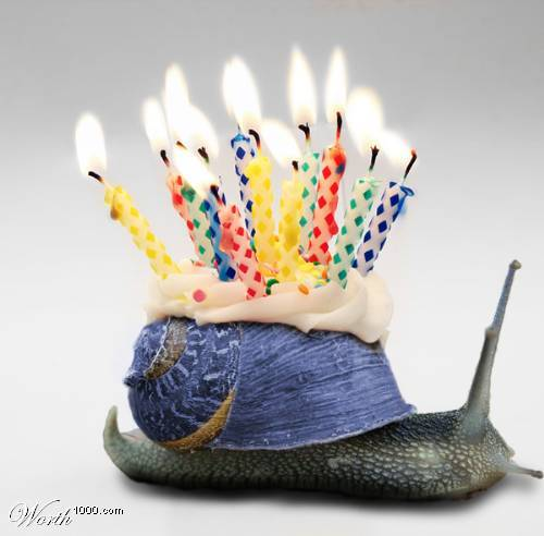 happy birthday snail