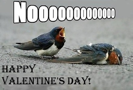 happy valentines day dead bird