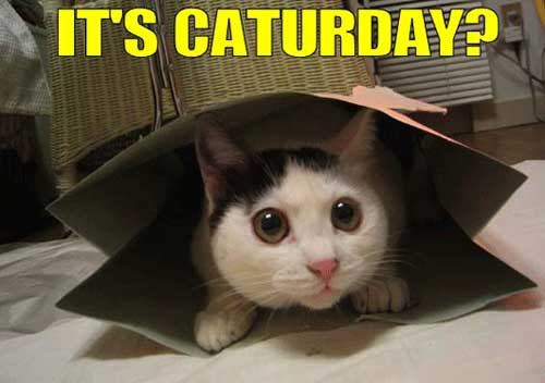 it's caturday?