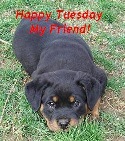 happy tuesday my friend dog