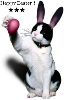 happy easter cat