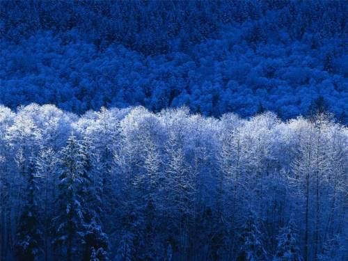blue forests