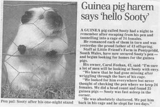 Guinea pig article