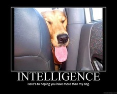 intelligence - here's to hoping you have more than my dog