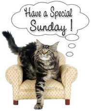 have a special sunday cat