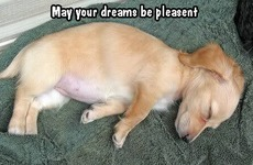 may your dreams be pleasent